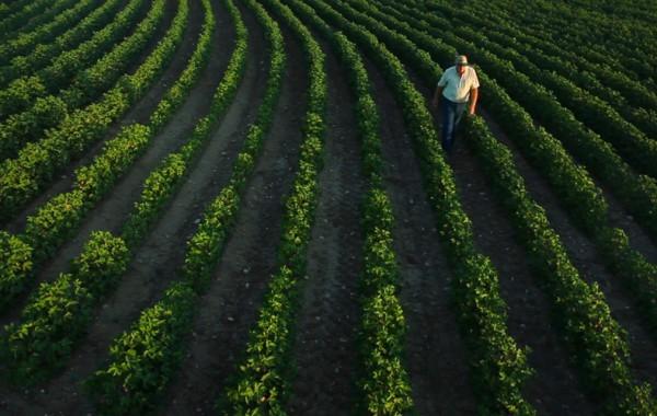 Shannon Medical Center – Farmer